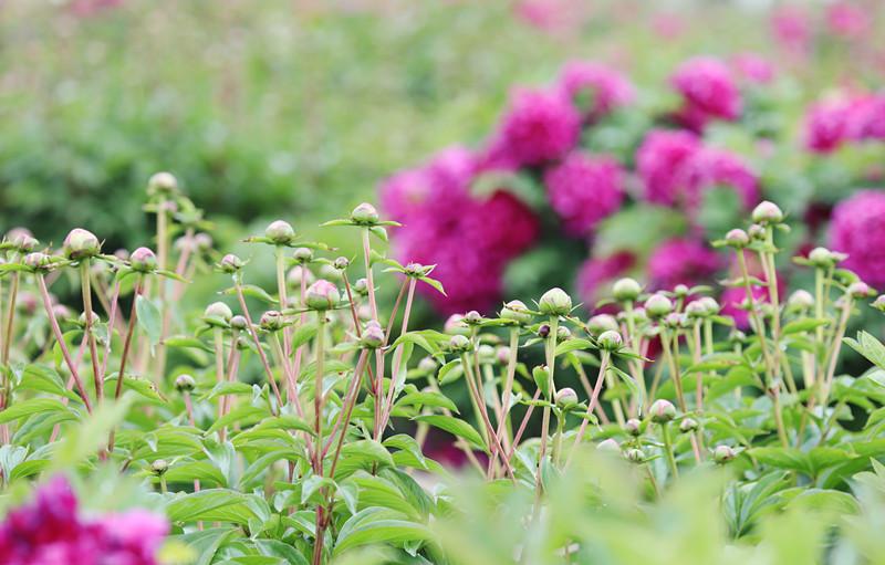 3.2繁花朵朵.jpg